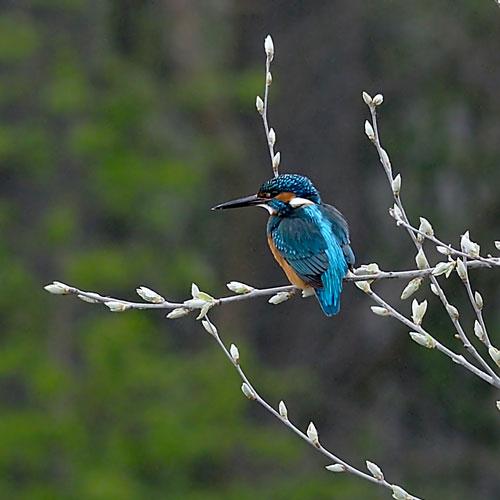 pianura-blu